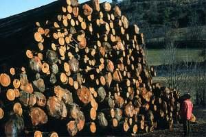 Alpes de Haute-Provence : le Conseil général dénonce les projets de centrales à biomasse