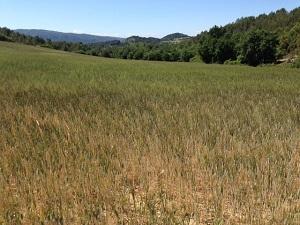 Alpes de Haute-Provence : une mesure incitative pour annuler le CET sur les Parrines ?