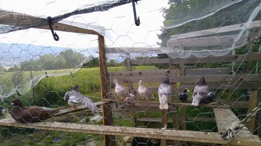 Hautes-Alpes : il réalise son rêve en créant sa ferme