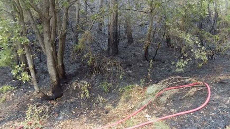 Alpes de Provence : 3 ans de prison pour des incendies criminels