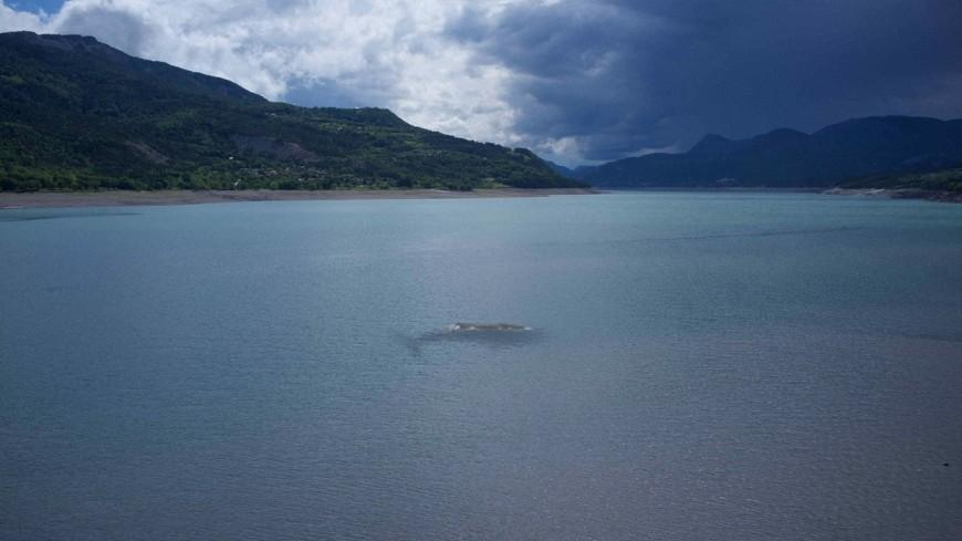 Lac Serre Poncon : Hautes alpes : une baleine dans serre ponçon ?