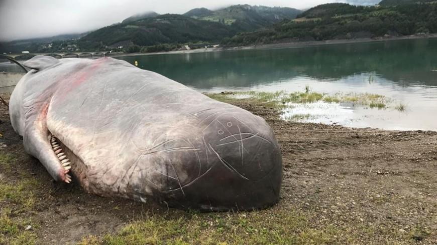 Hautes-Alpes : un cachalot à Savines le Lac, la création artistique d'un collectif belge