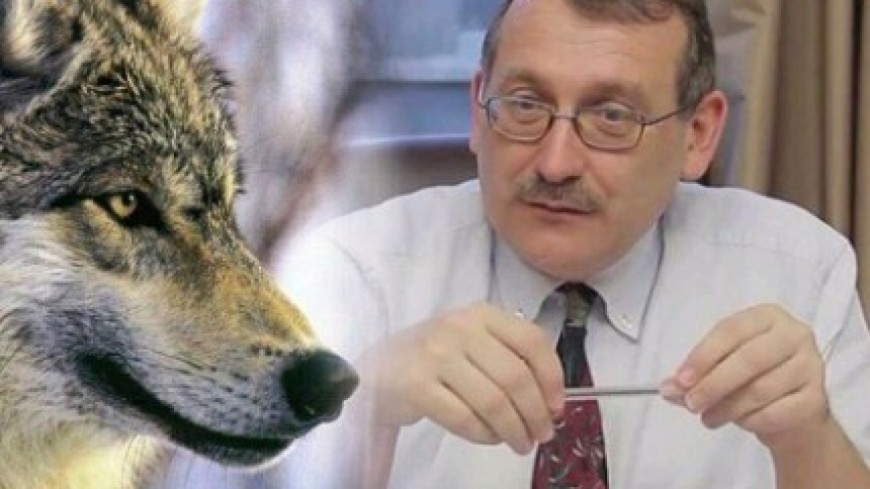 Hautes-Alpes : loup, J. Giraud obtient un arbitrage avec le gouvernement