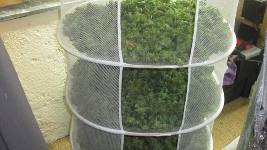 Hautes-Alpes : 4 kilos de tête, 6 de feuilles et 19 plants de cannabis découverts à Saint-Bonnet