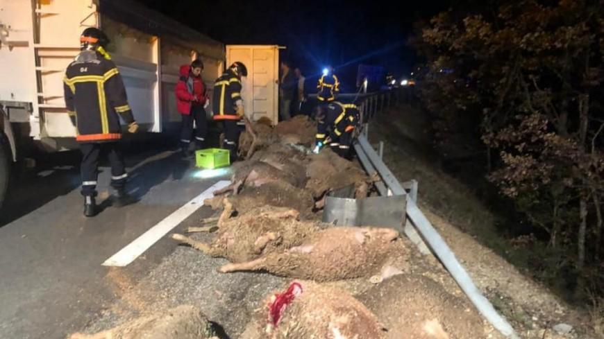 Alpes de Haute-Provence : Bras d'Asse, 37 moutons tués sur la RD 953