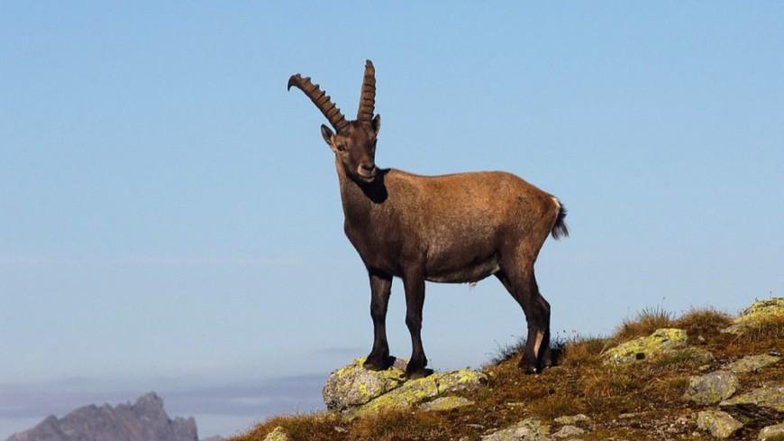 Hautes-Alpes : Le Royaume, un film sur les espèces animales de nos montagnes