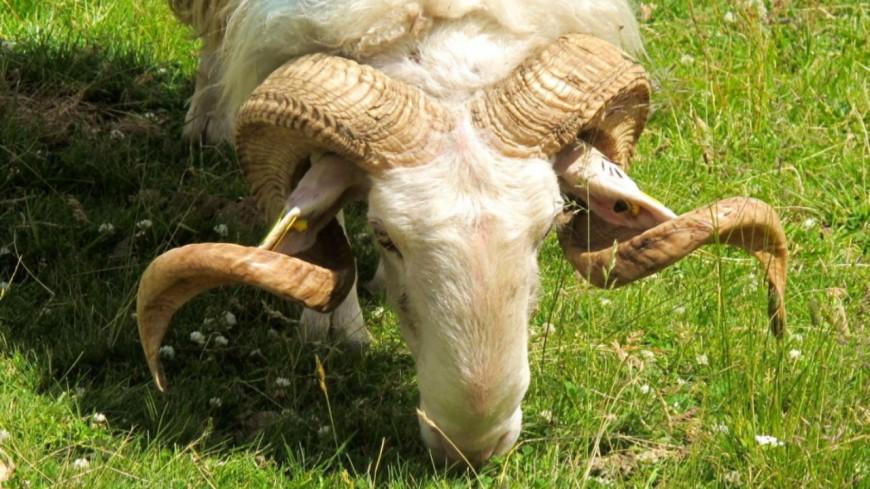 Alpes du Sud : première réunion du groupe d'Etudes d'Elevage Pastoral
