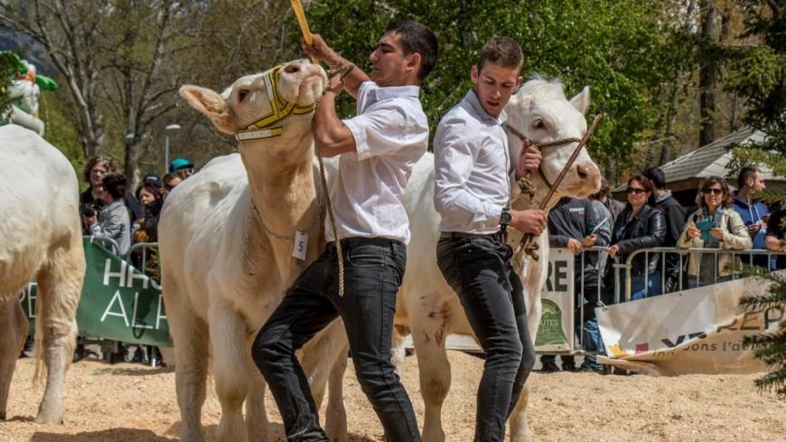 Hautes-Alpes : le salon de l'élevage se poursuit aujourd'hui