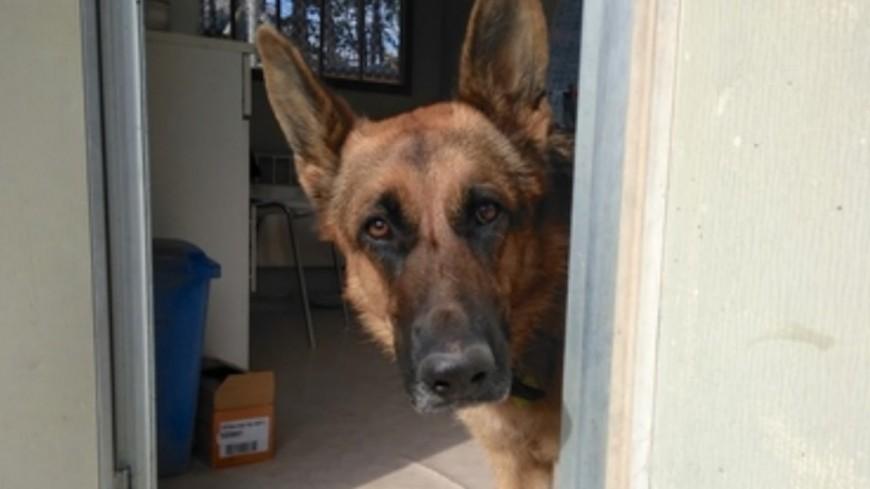 Alpes de Haute-Provence : aidez Nikita, jeune chienne malade