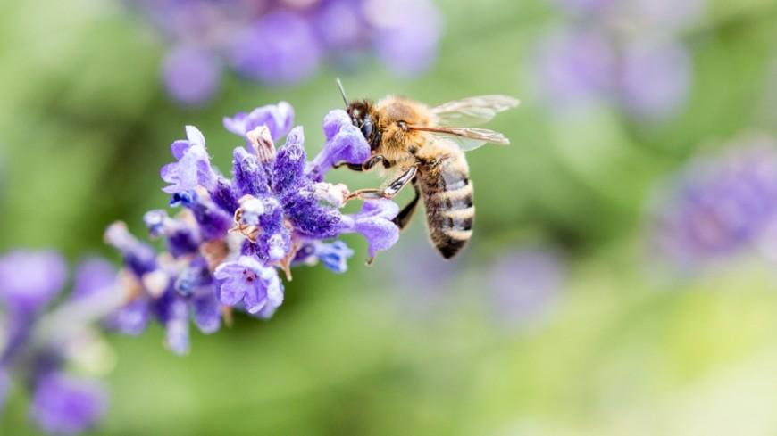 Région PACA : des graines pour sauver les abeilles