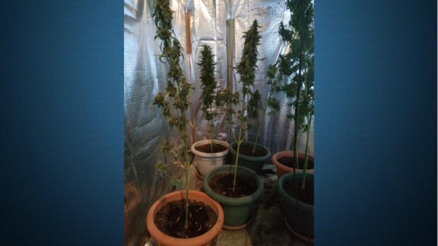Alpes de Haute-Provence : saisies de stupéfiants dans deux domiciles