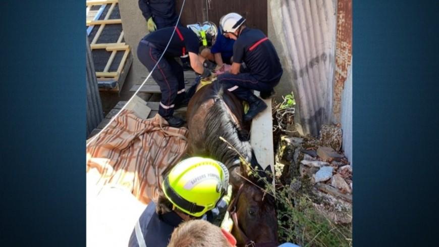 Alpes de Haute-Provence : les pompiers secourent un cheval en difficulté