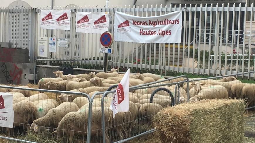 """Hautes-Alpes : les agriculteurs rencontrent à nouveau la préfète ce mercredi suite à leur """"mur de la colère"""""""