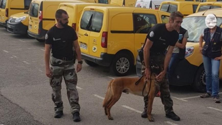 Alpes de Haute-Provence : chiens agressifs, 200 facteurs sensibilisés