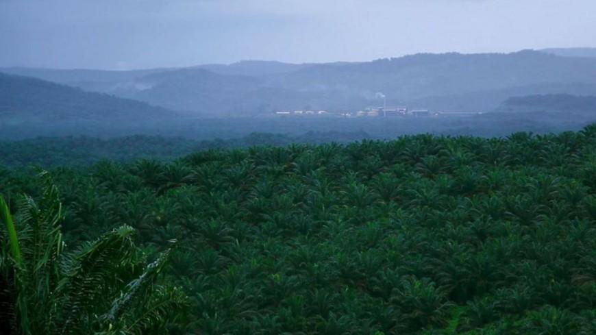 Région : amendement sur l'huile de palme, R. Muselier s'en félicite