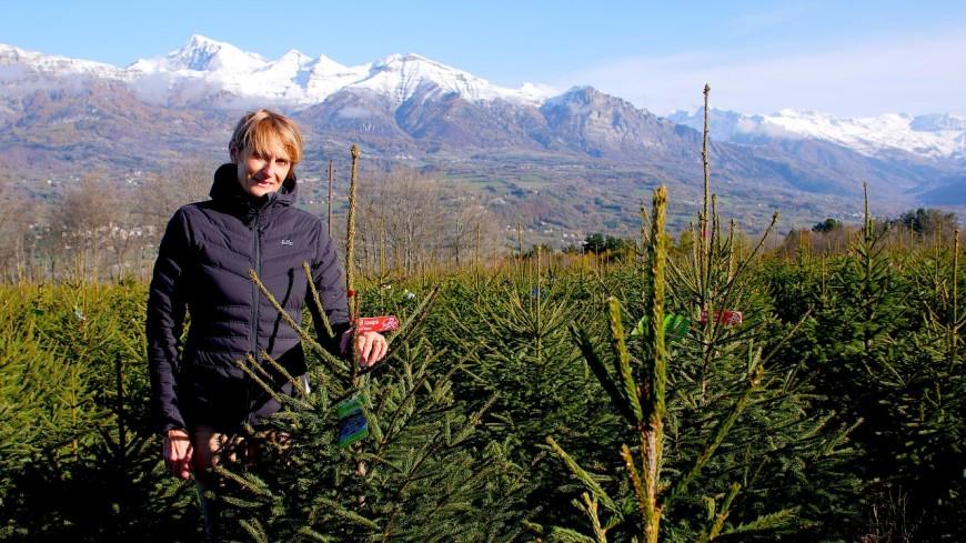 Hautes-Alpes : Noël, ses sapins et leur chiffre d'affaires