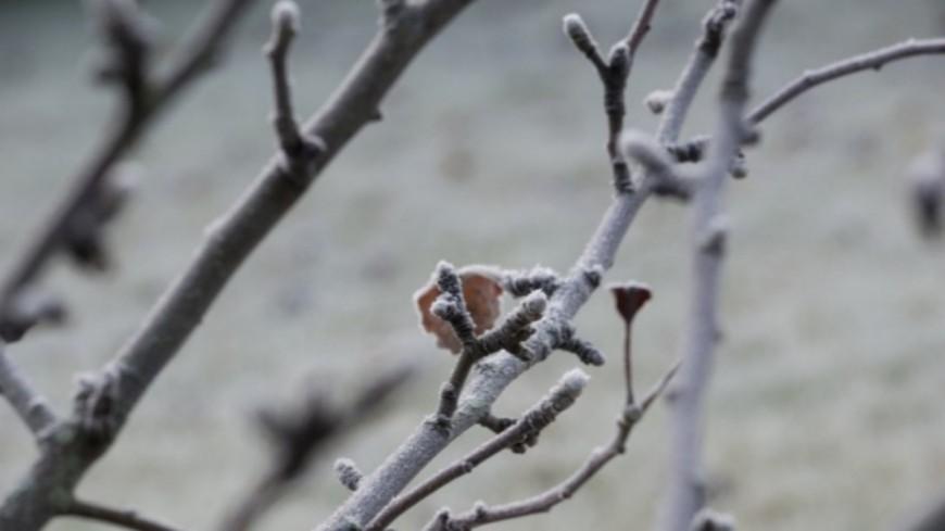 Alpes de Haute-Provence : gel du printemps dernier, reconnaissance en calamités agricoles