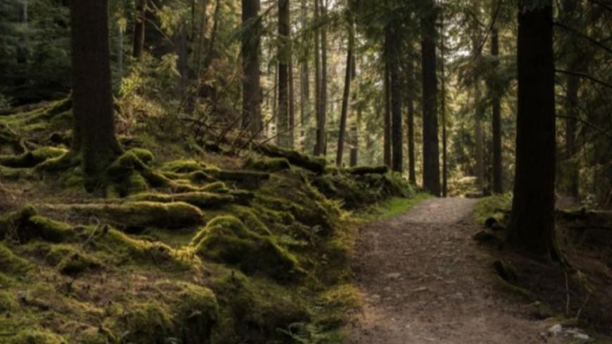 Alpes de Haute Provence : 20 ans d'existence pour les agents de protection de la forêt méditerranéenne
