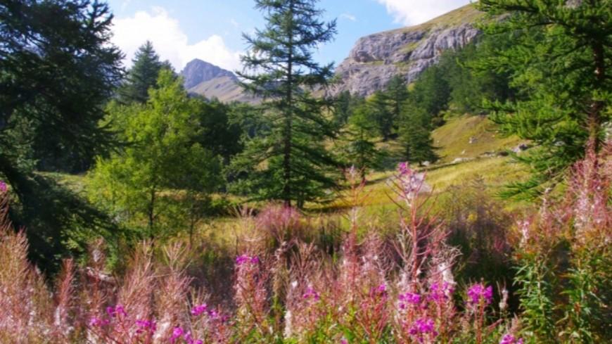 Hautes Alpes : concertation citoyenne pour la Réserve naturelle régionale des Partias