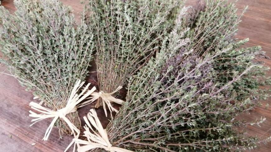 Alpes du Sud : des plantes aromatiques produites en bio à Gréoux les Bains