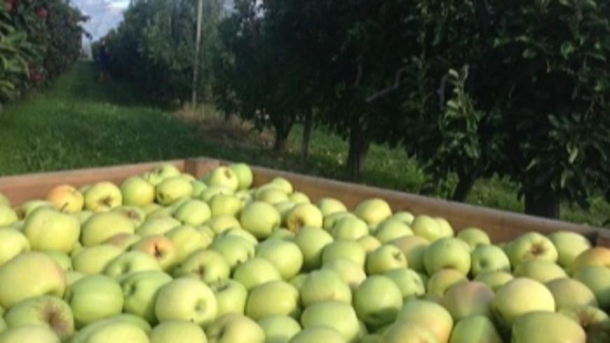 """Agriculture : Le gouvernement appelle ceux """"qui n'ont plus d'activité"""" à aider les agriculteurs."""