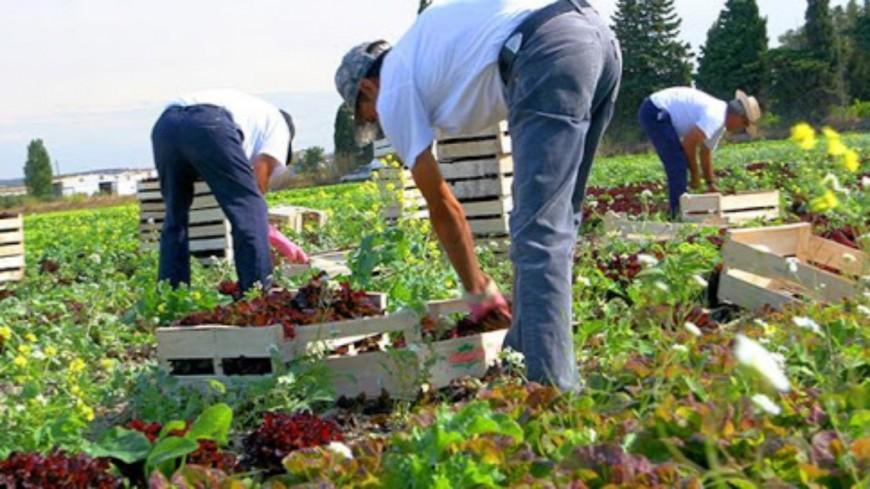 Agriculture : L'agriculture des Hautes-Alpes pleinement mobilisée pour faire face à la crise sanitaire !