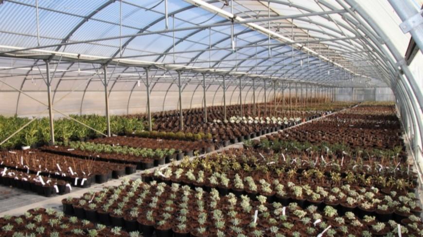 Agriculture : L'état au secours de la filière Horticole.