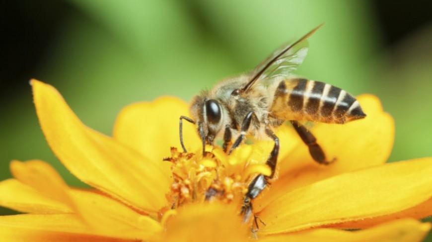 Alpes de Haute-Provence : La fête du miel et de l'abeille de Forcalquier le 2 août.