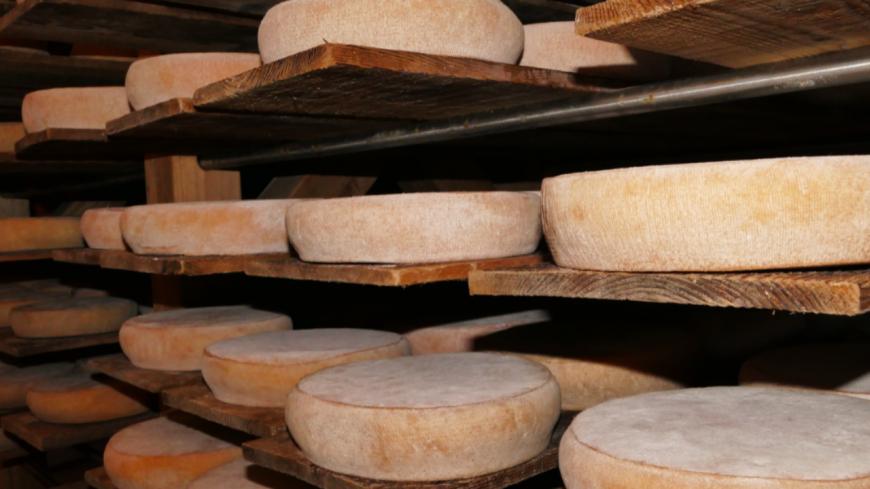 Hautes-Alpes : des fromages au goût d'histoire à Mont-Dauphin