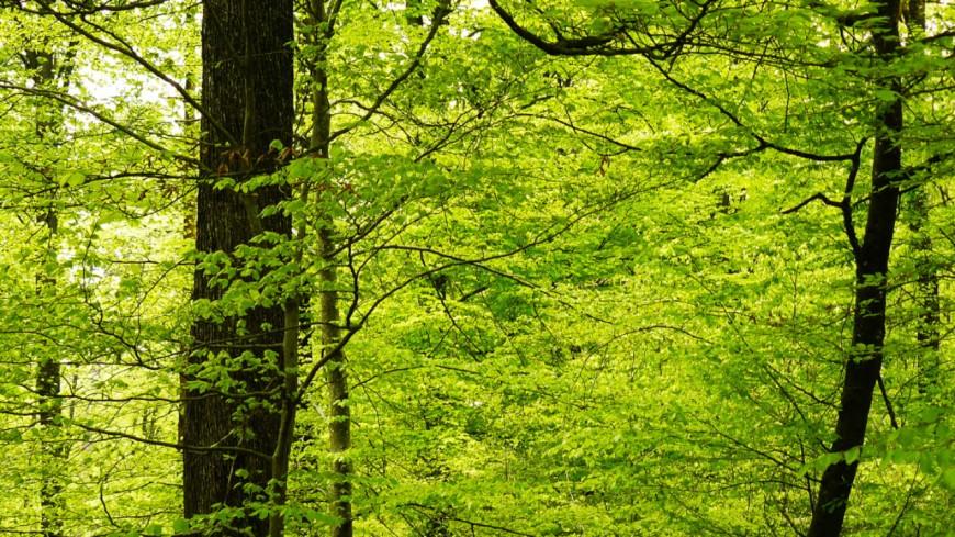 Alpes du Sud : 47 communes aidées par la dotation de biodiversité