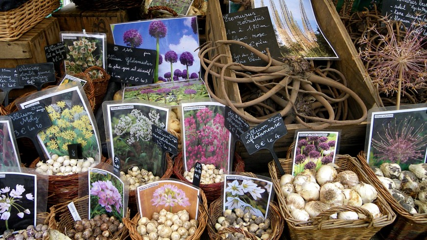 Hautes-Alpes : marché des fruits anciens à Orpierre