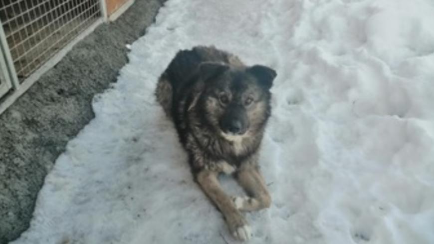 Alpes de Haute-Provence : une cagnotte pour aider Colorado à se soigner