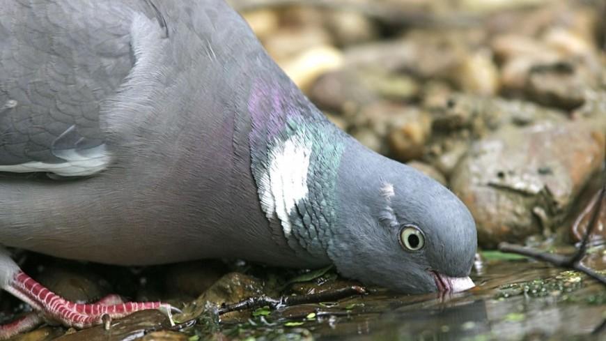 Hautes-Alpes : un collectif en défense des pigeons de Gap