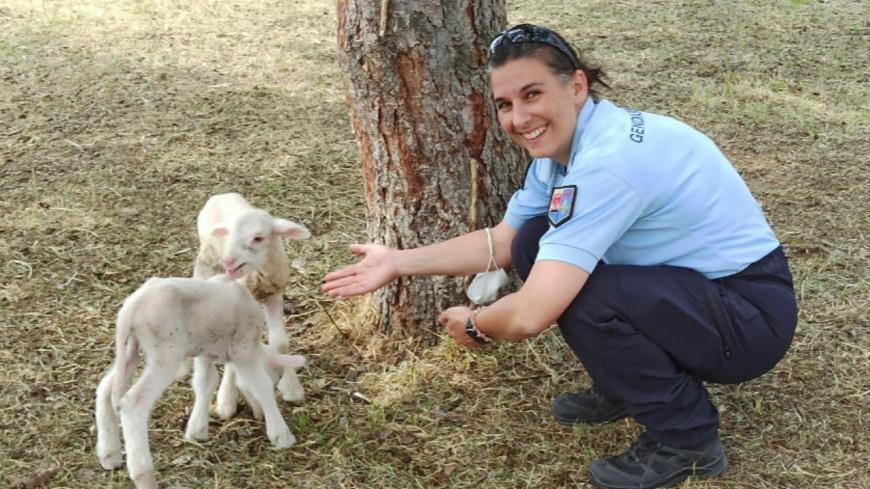 Alpes de Haute-Provence : la gendarmerie recrute... dans le pré !