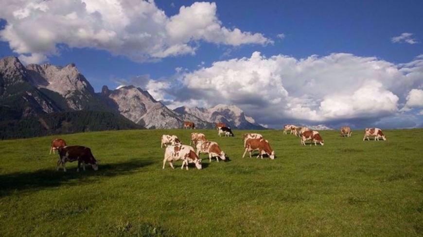 Alpes du Sud : des préconisations pour sortir la filière lait de montagne de la crise