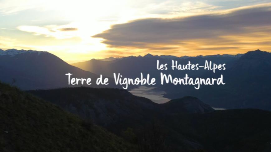 Hautes-Alpes : le vignoble haut-alpin à l'honneur dans un mini-documentaire