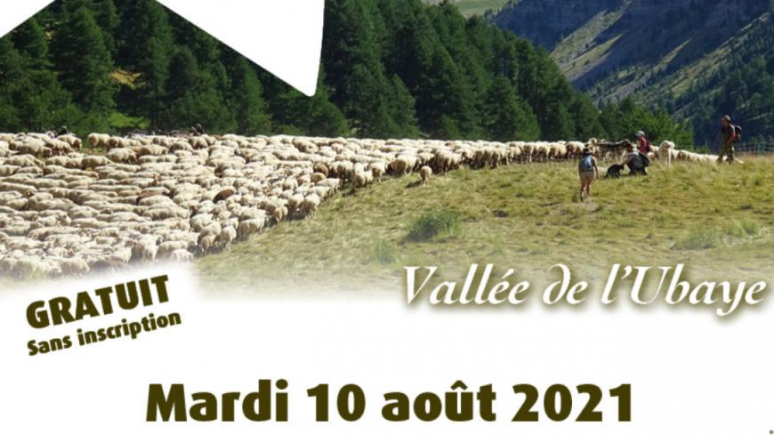 Haute-Provence : à la découverte de l'alpage à Saint-Paul sur Ubaye
