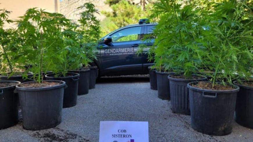 Alpes de Haute-Provence : appelés sur un incendie, les gendarmes retrouvent des plants de cannabis