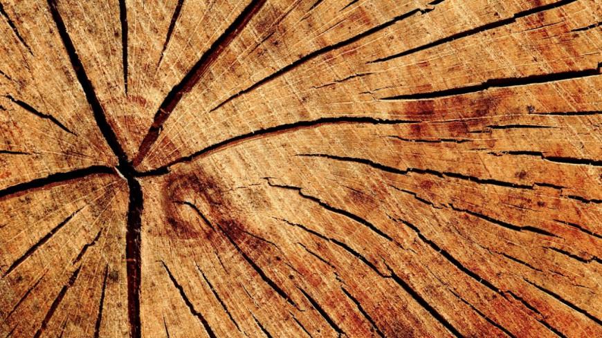 Hautes-Alpes : le département reconnu par les hautes sphères dans sa gestion du bois