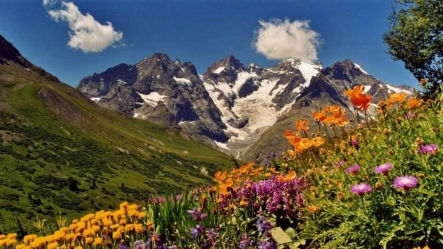 Hautes-Alpes : tourisme scientifique autour des jardins alpins