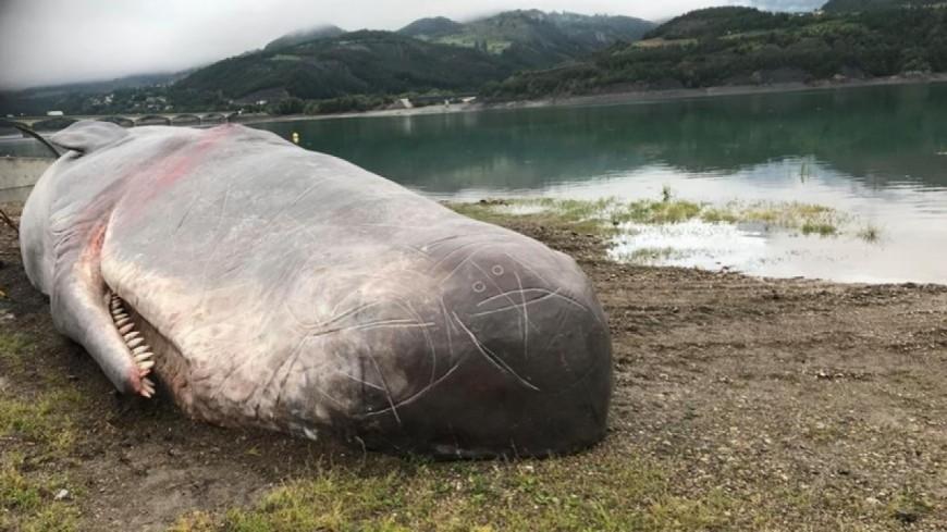 Hautes-Alpes : 10.000 personnes ont vu un cachalot échoué