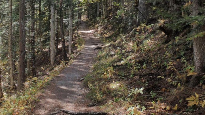Hautes-Alpes : Boscodon, une forêt d'exception de 878 hectares