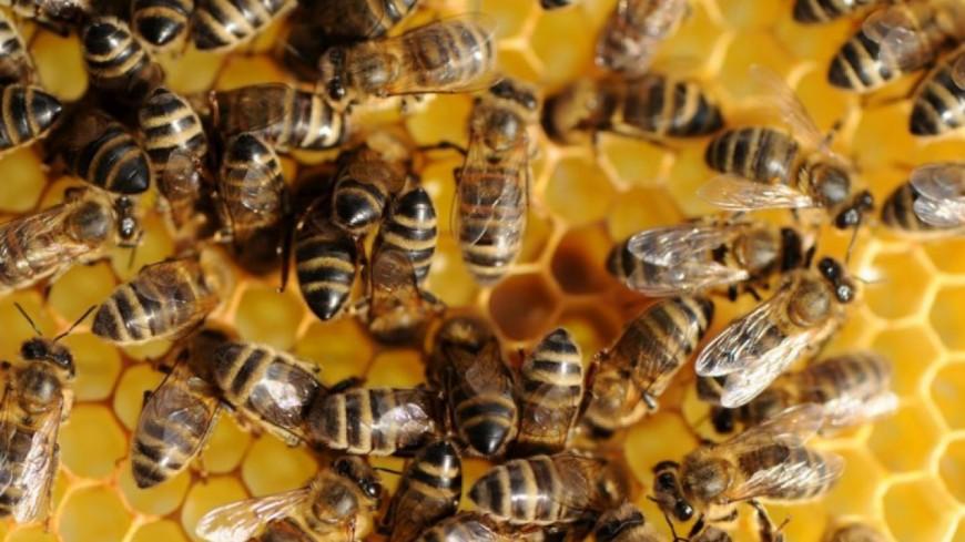 Alpes du Sud : Les députés disent non aux néonicotinoïdes, le pesticide « tueur d'abeilles »