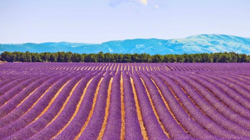 Alpes de Haute-Provence : l'Agence de Développement, ou la chasse en meute