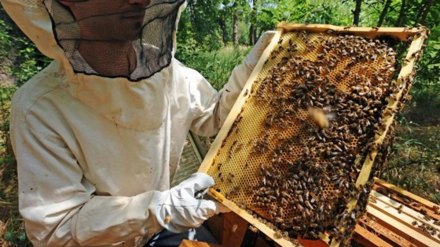 apiculteur manosque