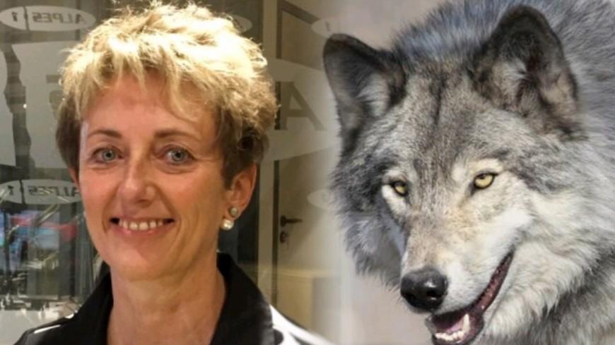 Alpes du Sud : Berne, la France est-elle prête à revoir le statut du loup ? la sénatrice pose la question au Premier ministre