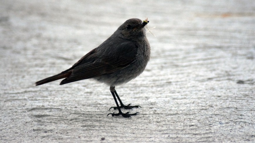 Hautes-Alpes : il faut nourrir les oiseaux en hiver