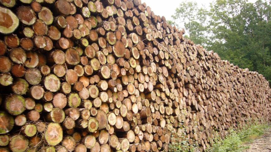 Hautes-Alpes : débattre sur l'impact du développement du bois énergie