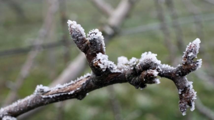 Hautes-Alpes  : retour du froid sur la végétation, K.Berger demande le classement en catastrophe naturelle
