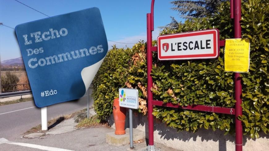 Alpes de Haute-Provence : 170 espèces d'oiseaux au lac de l'Escale